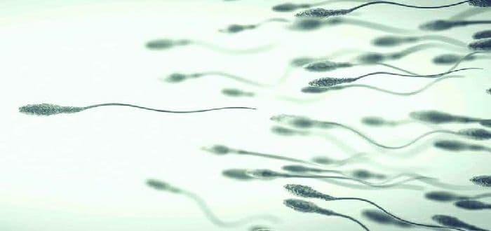تشوهات الحيوانات المنوية والحمل