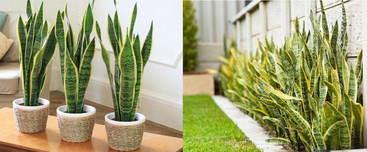جملي منزلك بالنبات و تعلمي أهم الطرق للعناية به 🌳🍂