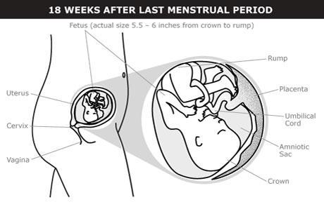 ماذا يحدث في الشهر الرابع والخامس من الحمل ؟! إليكِ التفاصيل !