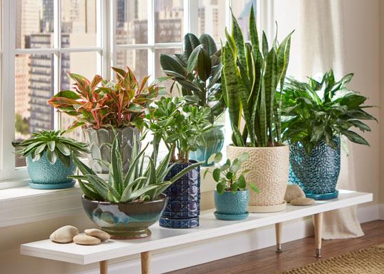 أفضل انواع النباتات المنزلية وطرق العناية بها